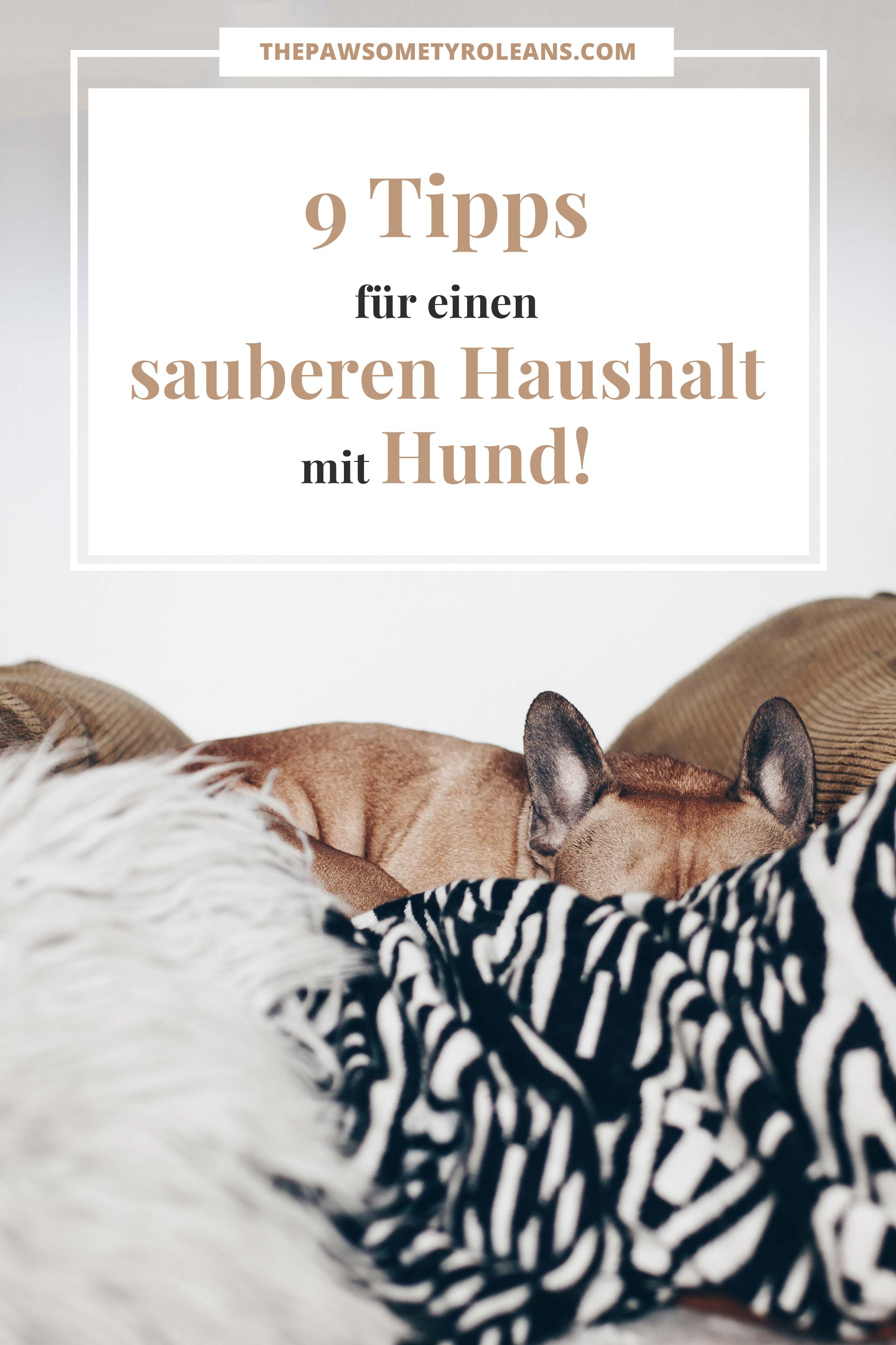 meine 9 tipps f r einen sauberen haushalt mit hund. Black Bedroom Furniture Sets. Home Design Ideas